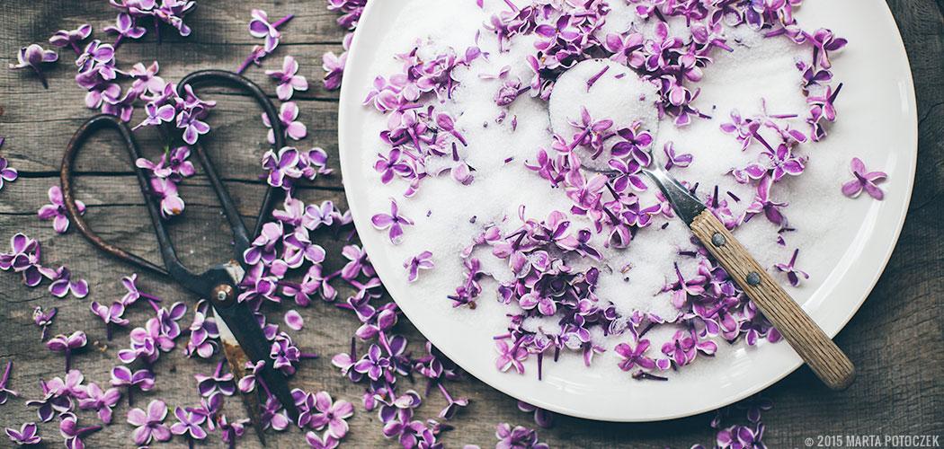 lilac-scrub-feat
