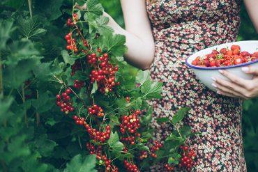 czy-warto-miec-owoce-w-ogrodzie