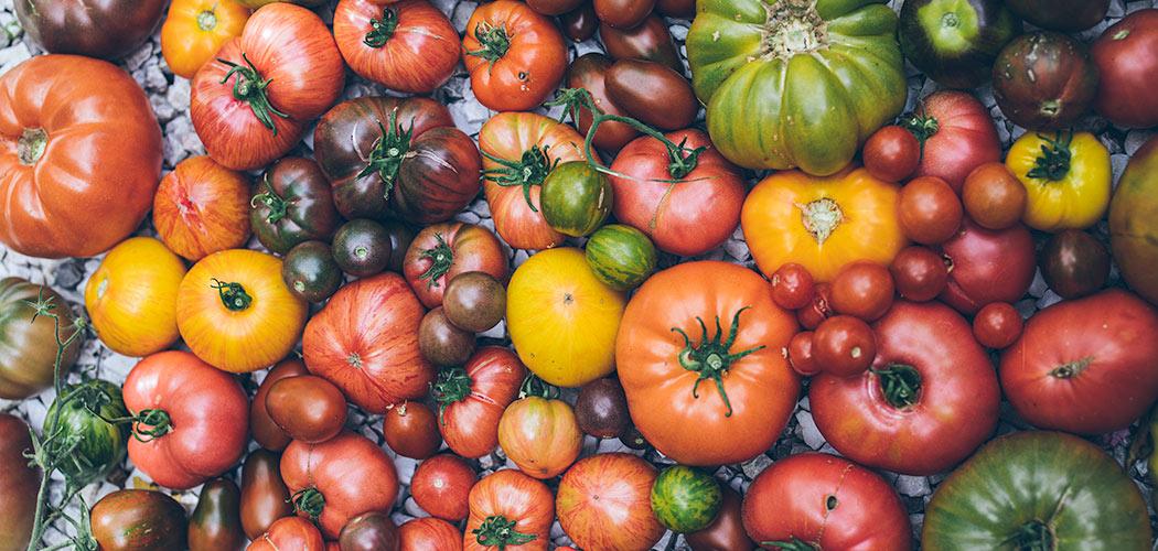 różnokolorowe odmiany pomidorów