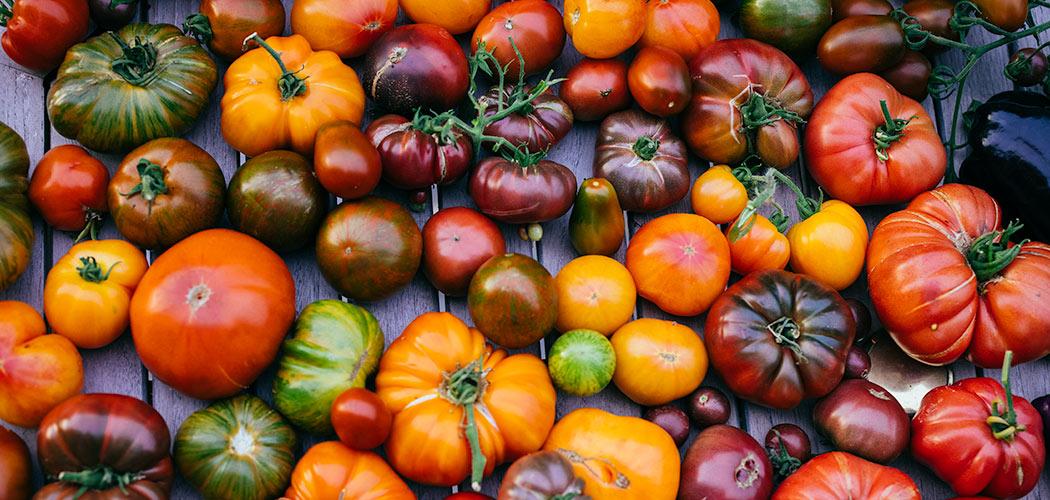 odmiany-pomidorow-feat