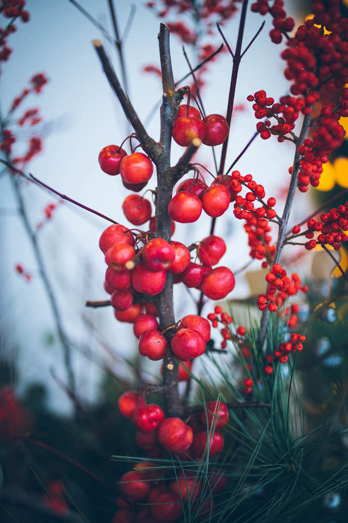 dekoracje świąteczne ogrpdu i domu-16
