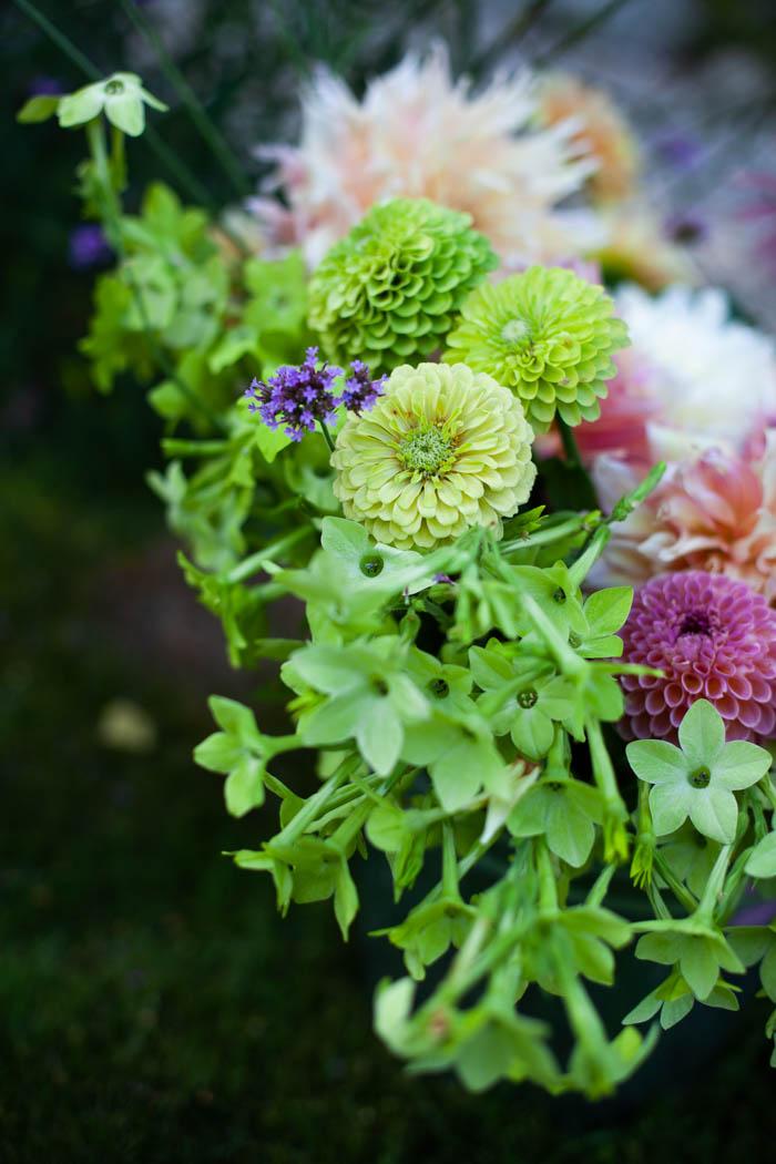 kwiaty jednoroczne-14