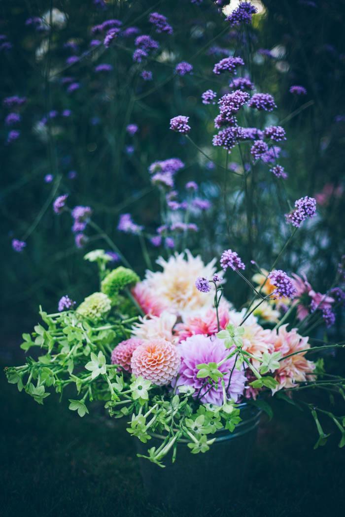 kwiaty jednoroczne-15