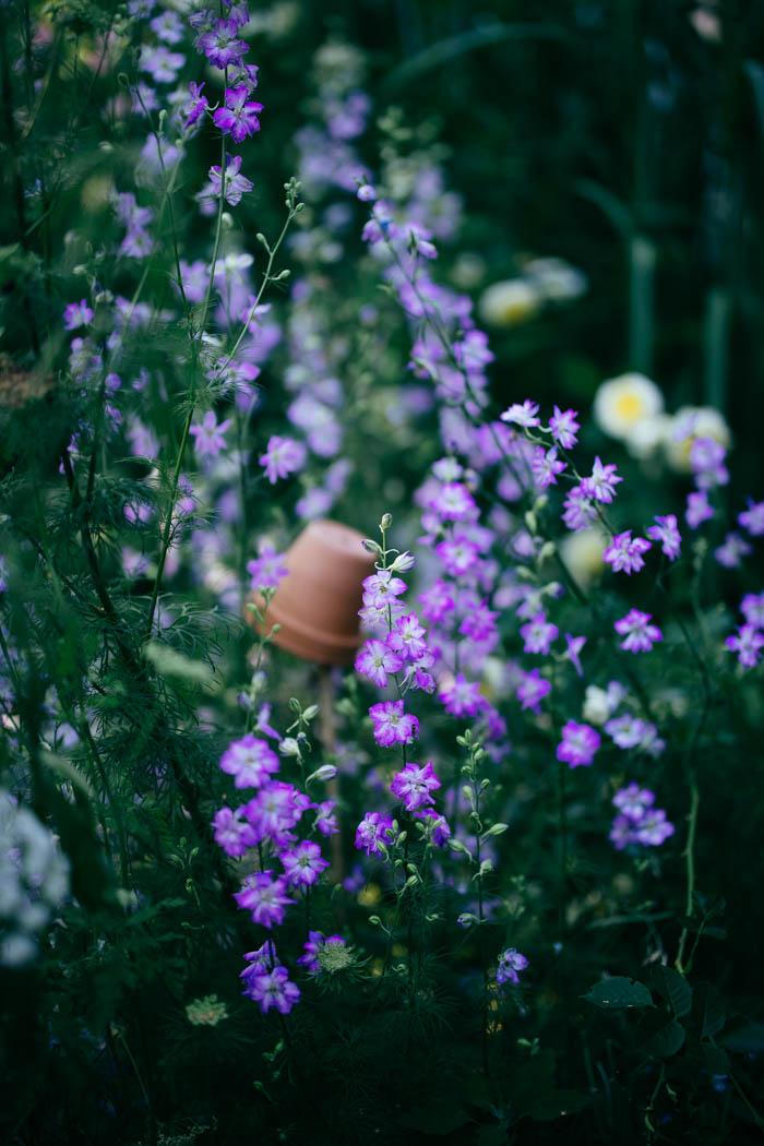 kwiaty jednoroczne-20