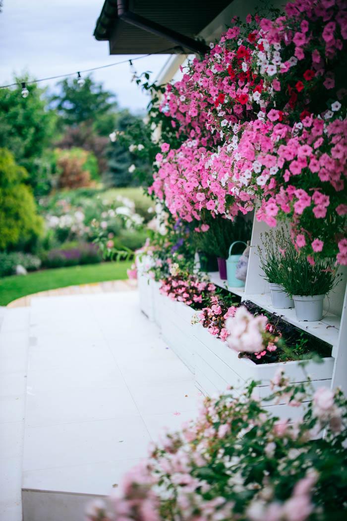 kwiaty jednoroczne-24