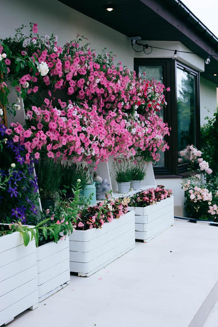 kwiaty jednoroczne-28