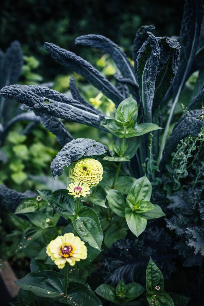 kwiaty jednoroczne-3