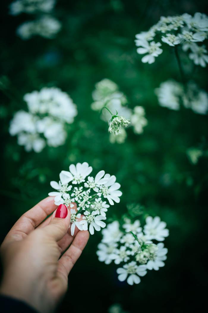 kwiaty jednoroczne-33