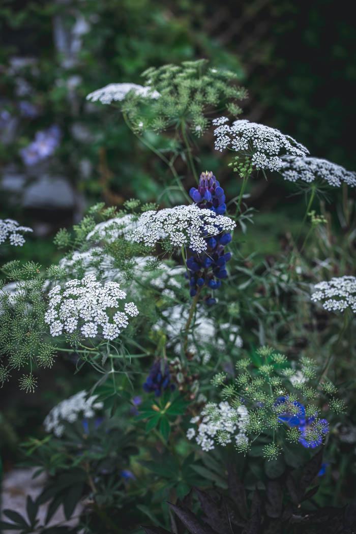kwiaty jednoroczne-6