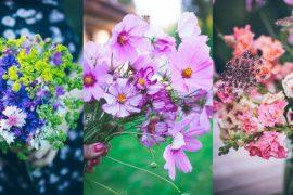 kwiaty_jednoroczne
