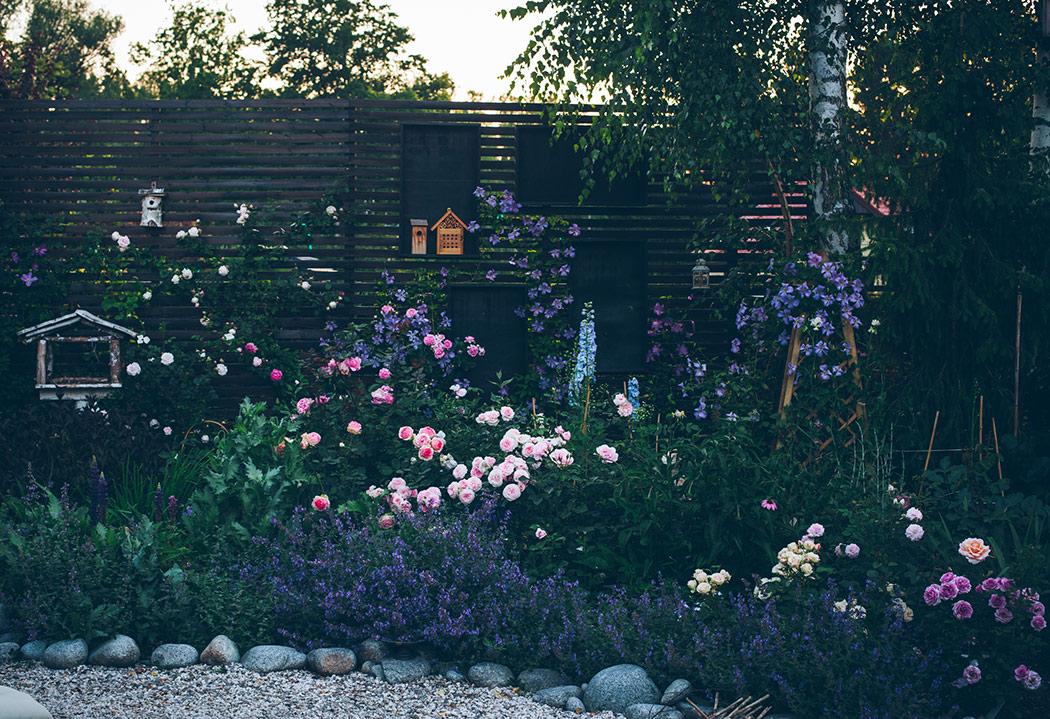 byliny w ogrodzie
