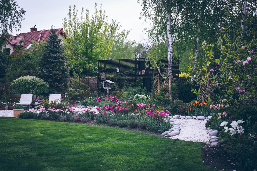 tulipany-6